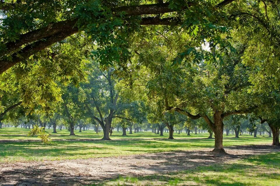 Pecan trees! ) Southern landscaping, Farmhouse
