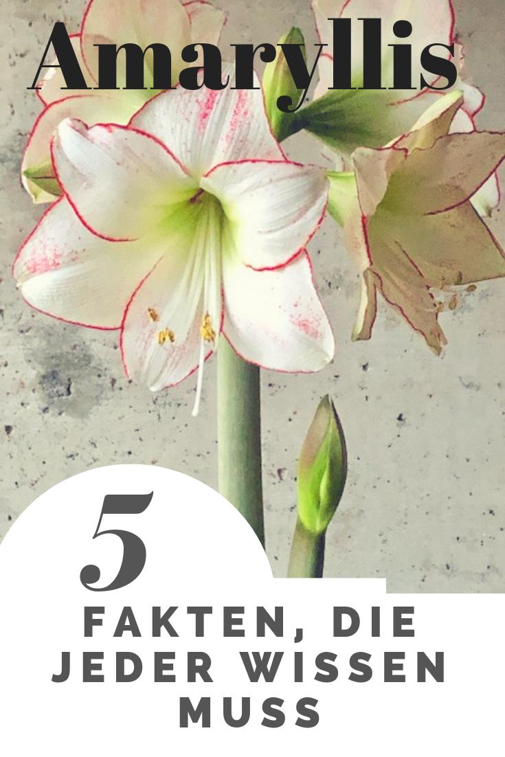 Wie Sie mit 5 einfachen Tipps Ihre Amaryllis gut durchs Jahr bringen #orchideenpflege