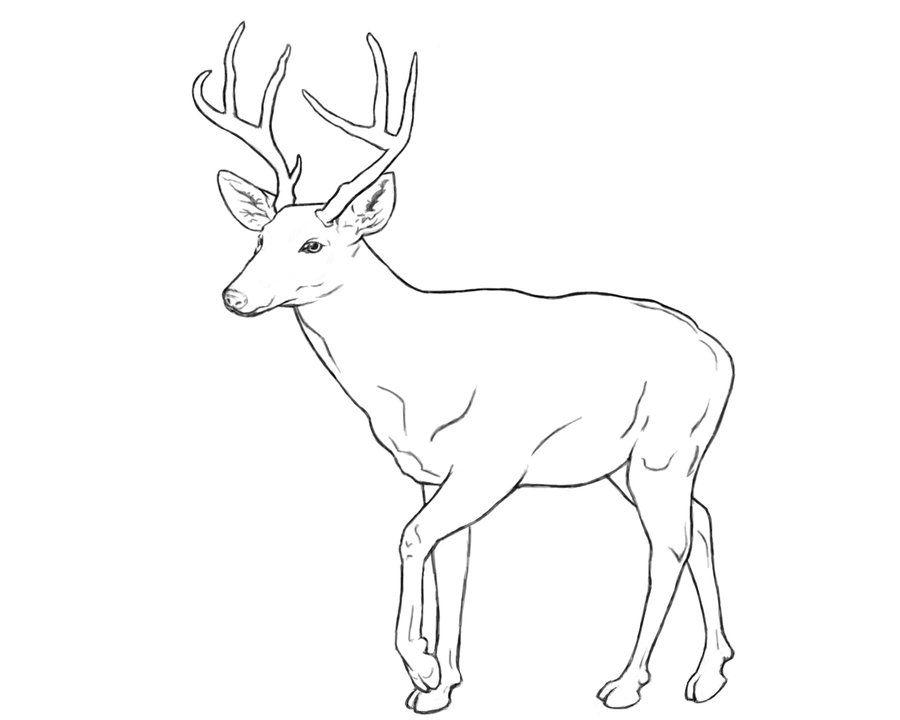 Deer Line Art By Monster Maxx On Deviantart Owls Drawing Deer Drawing Animal Coloring Books