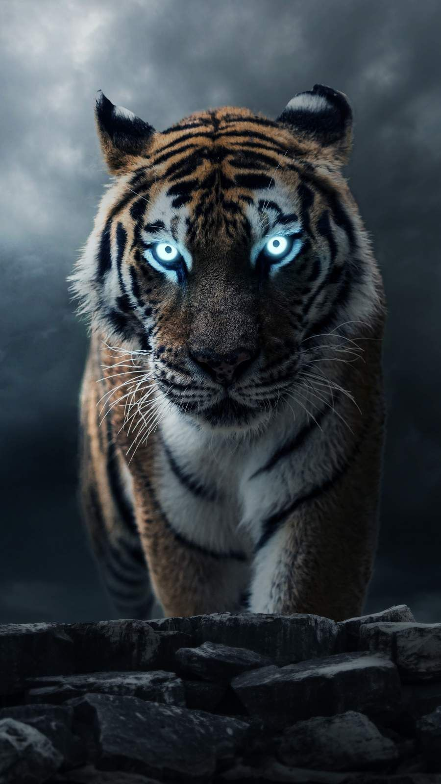 Iphone Wallpapers For Iphone 8 Iphone 8 Plus Iphone 6s Iphone 6s Plus Iphone X And Ipod Touc Iphone Wallpaper Images Wild Animal Wallpaper Animal Wallpaper