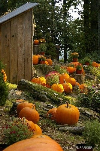 What a Festive & Fun Display of Pumpkins, Photo by Billy R. Parker~❥