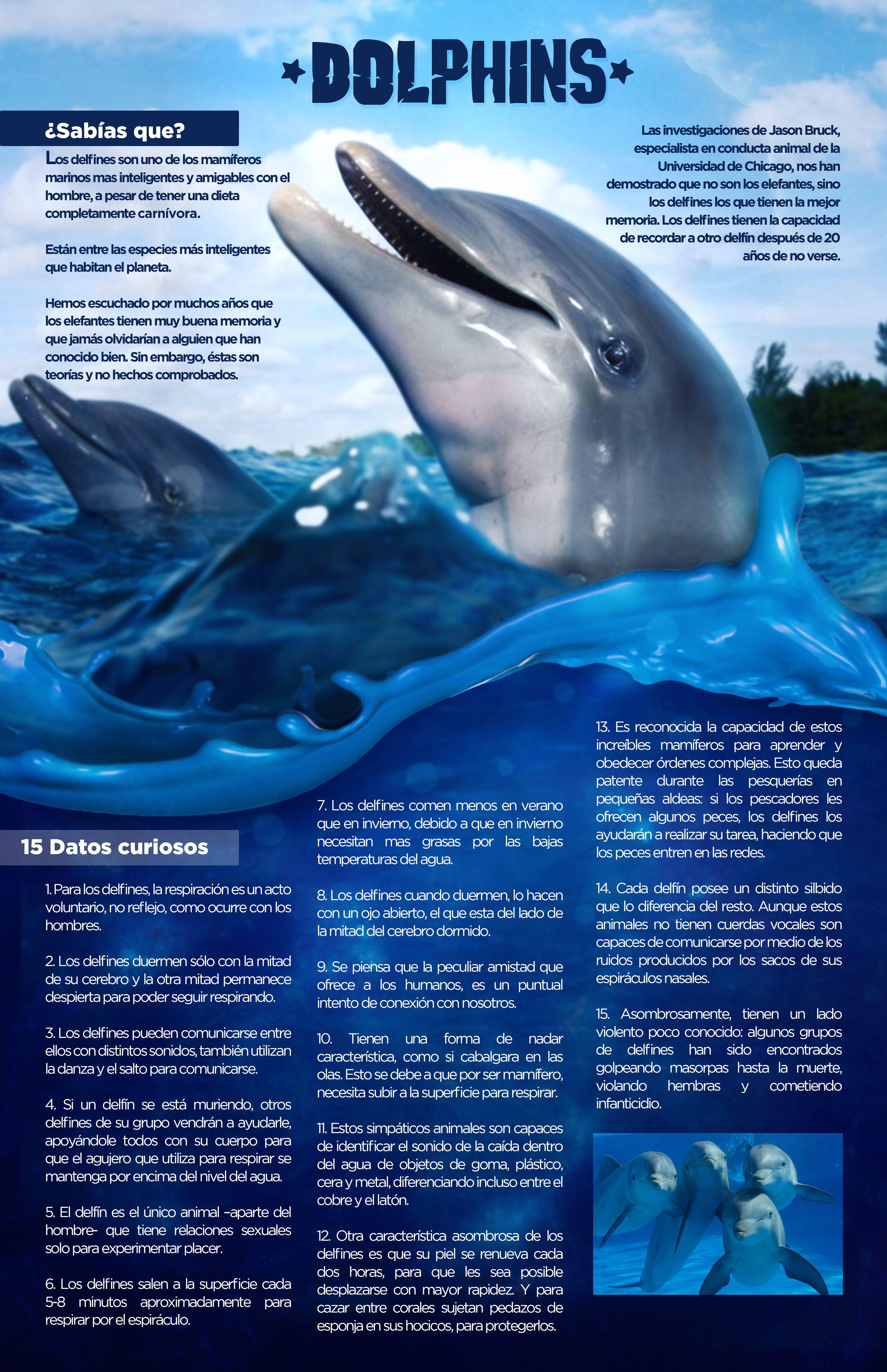 Infografía Delfin   Delfin   Pinterest   Delfines, Infografía y Tierra