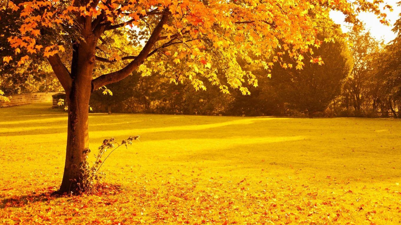 Background Wallpaper Hd Autumn Nature Photo 64 Tree Hd Wallpaper Hd Landscape Nature Backgrounds