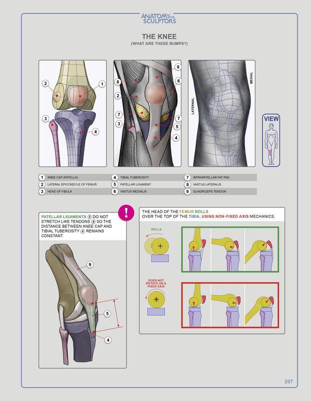 Anatomy Next store - Online EBOOK For Art & Design Students ...