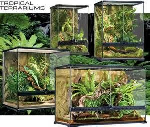 Exo Terra Terrarium 36x18x18 Bing Images Carnivore Garden