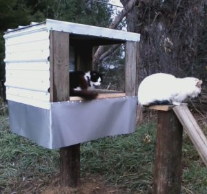 Feeding Station Options Alley Cat Allies Cat feeding