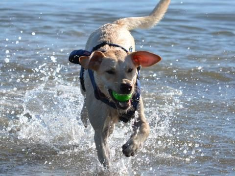 Dog Friendly Hotels Book Pet Friendly Hotels And Lodging
