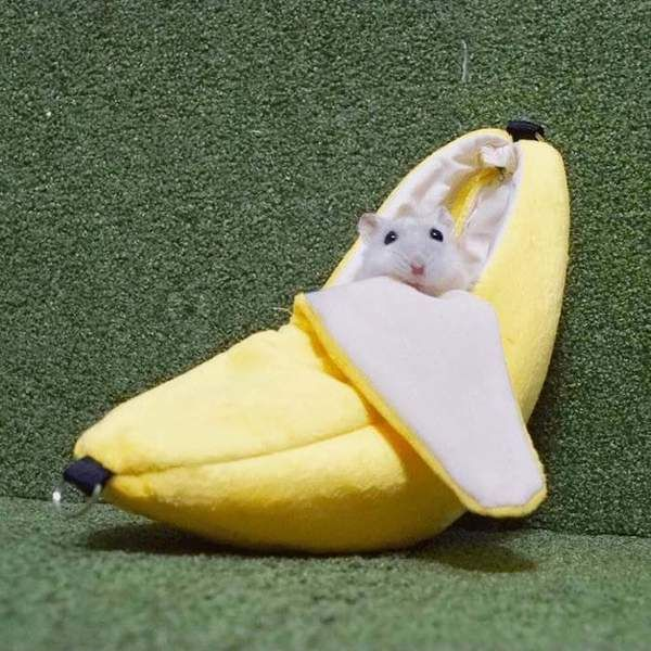 Pin On Hamsters