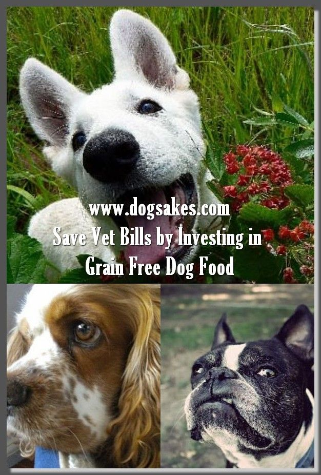 Info's : Dogs Need Digestive Enzyme - Dog Sakes