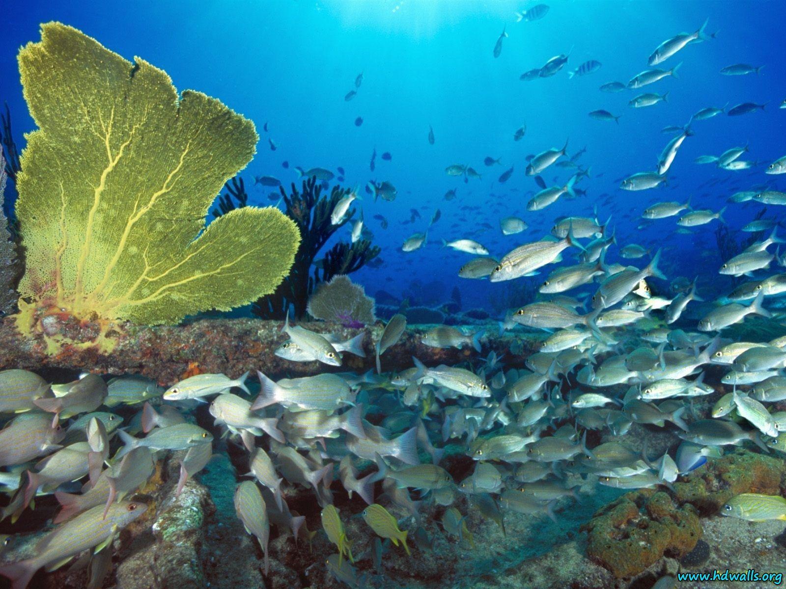 Underwater HD Widescreen Desktop Wallpapers