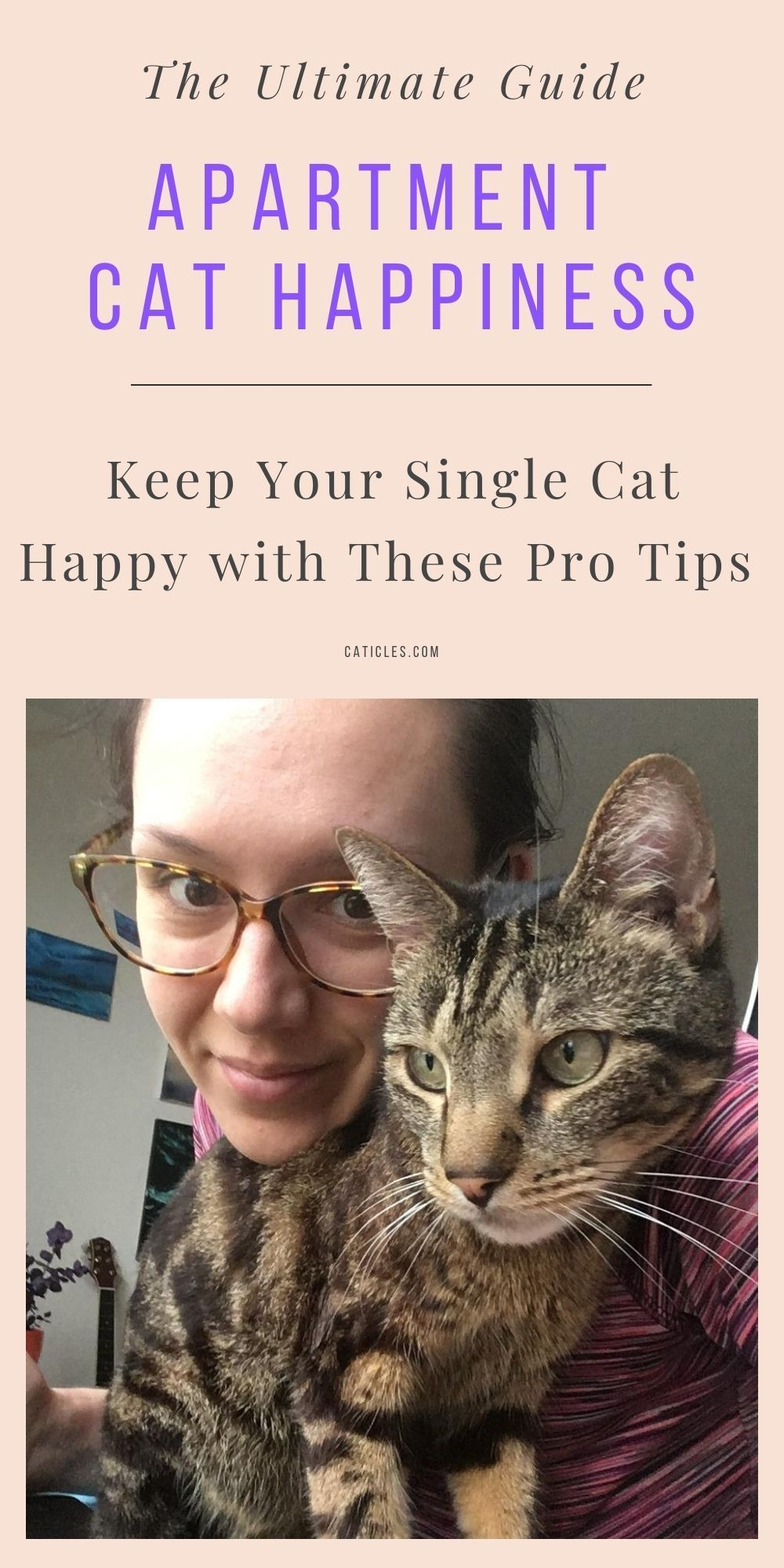 Exactly How To Keep A Single Cat Happy In An Apartment Cats Cat Problems Funny Cute Cats
