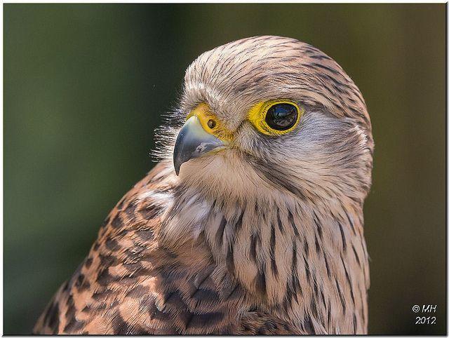 Got my eye on you! | Flickr - Fotosharing!