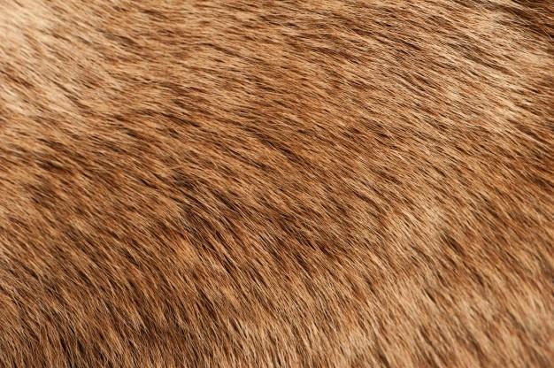 Furr Texture חיפוש Google Fur Textures Texture Images Texture