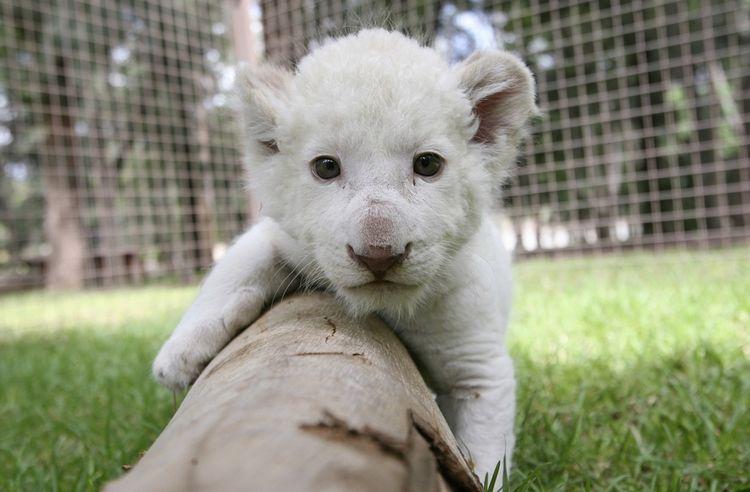 Ranking-fotografias-animales-adorables_LRZIMA20121211_0084_4.jpg (750×492)