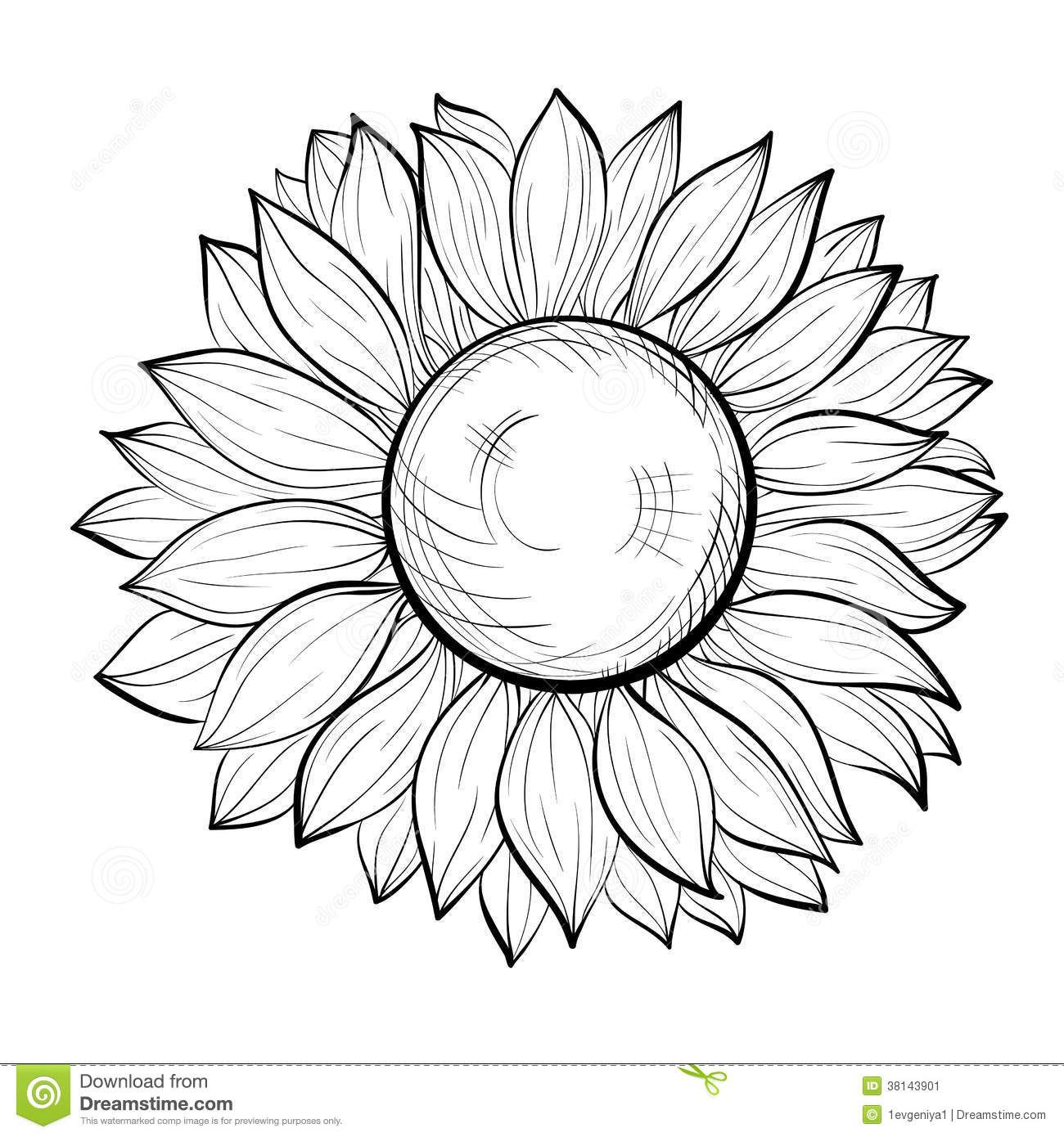 sunflower drawing - Buscar con Google | Pics - Black  for Clipart Sunflower Black And White  45gtk