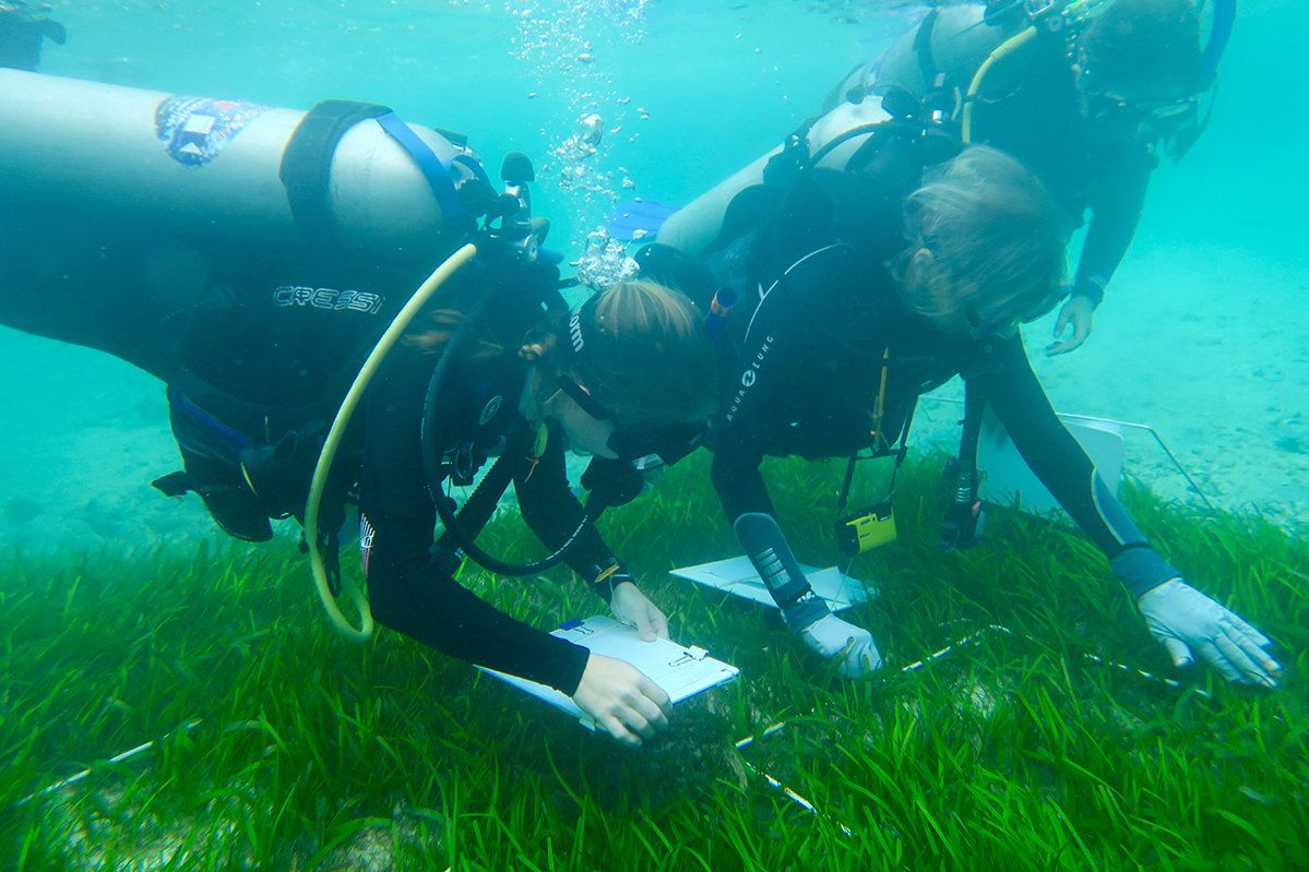 For seagrass, biodiversity is both a goal and a means for