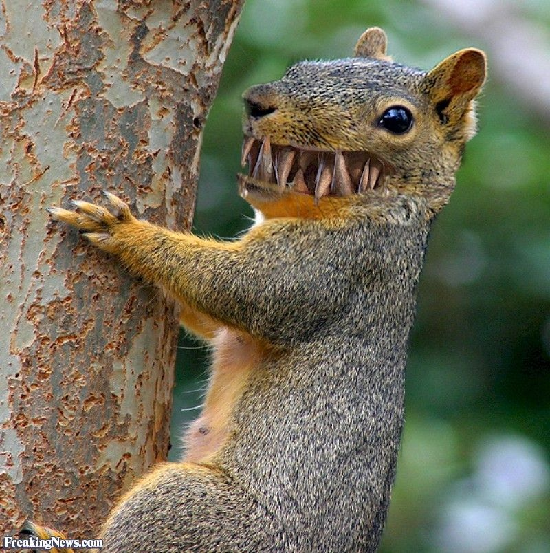 Zombie Squirrel Attack Squirrel Pictures Say What Funny