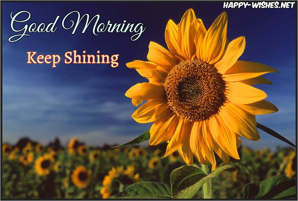 20 Good Morning Wishes With Sunflower Happy Wishes Funny Good Morning Images Cute Good Morning Images Good Morning Images Flowers