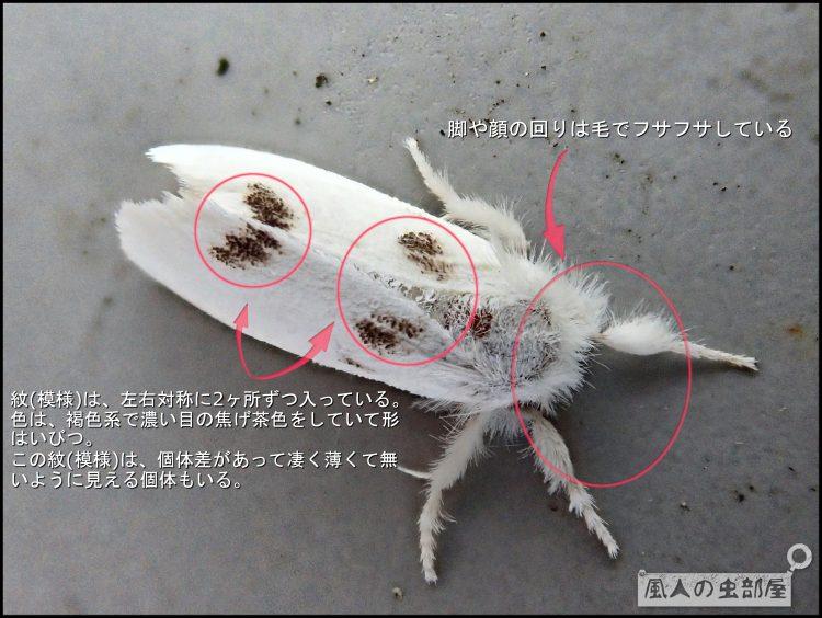 白くてキレイなのに毒がある蛾 モンシロドクガ 蛾 シロ のに