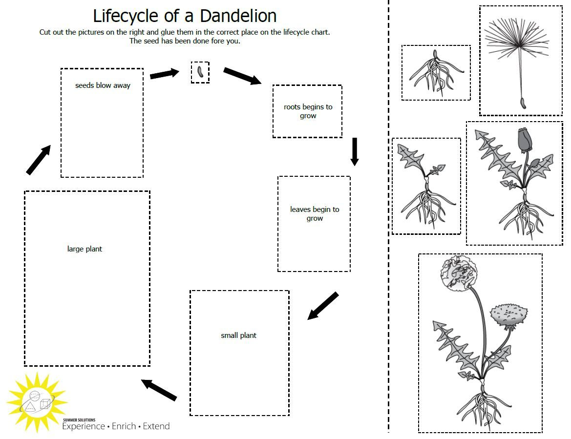 Worksheets Life Cycle Of A Plant Worksheet teach students about the plant lifecycle with this free life cycle worksheet 595 x 820 23 kb gif cycle