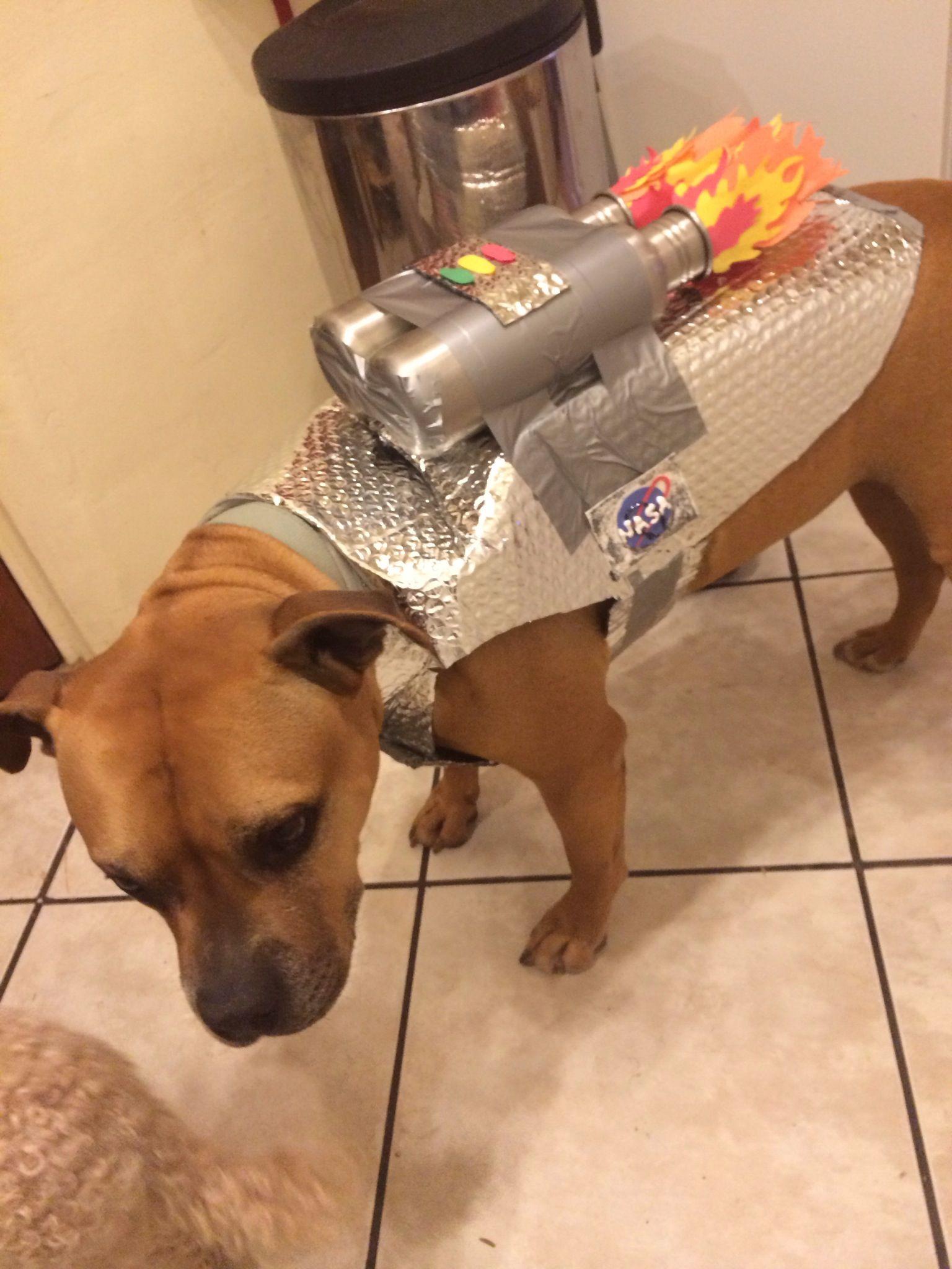 How To Make An Easy Astronaut Dog Costume Recipe Dog Halloween