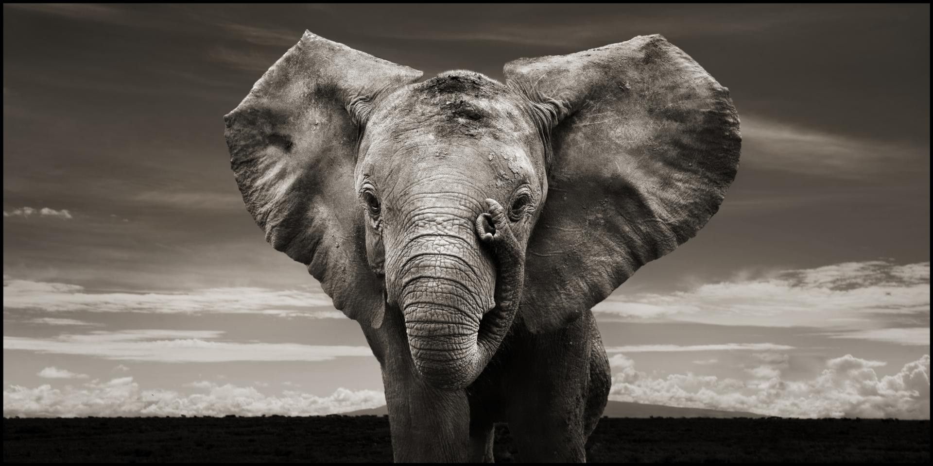 elephant wallpaper 10455 Elephants Pinterest
