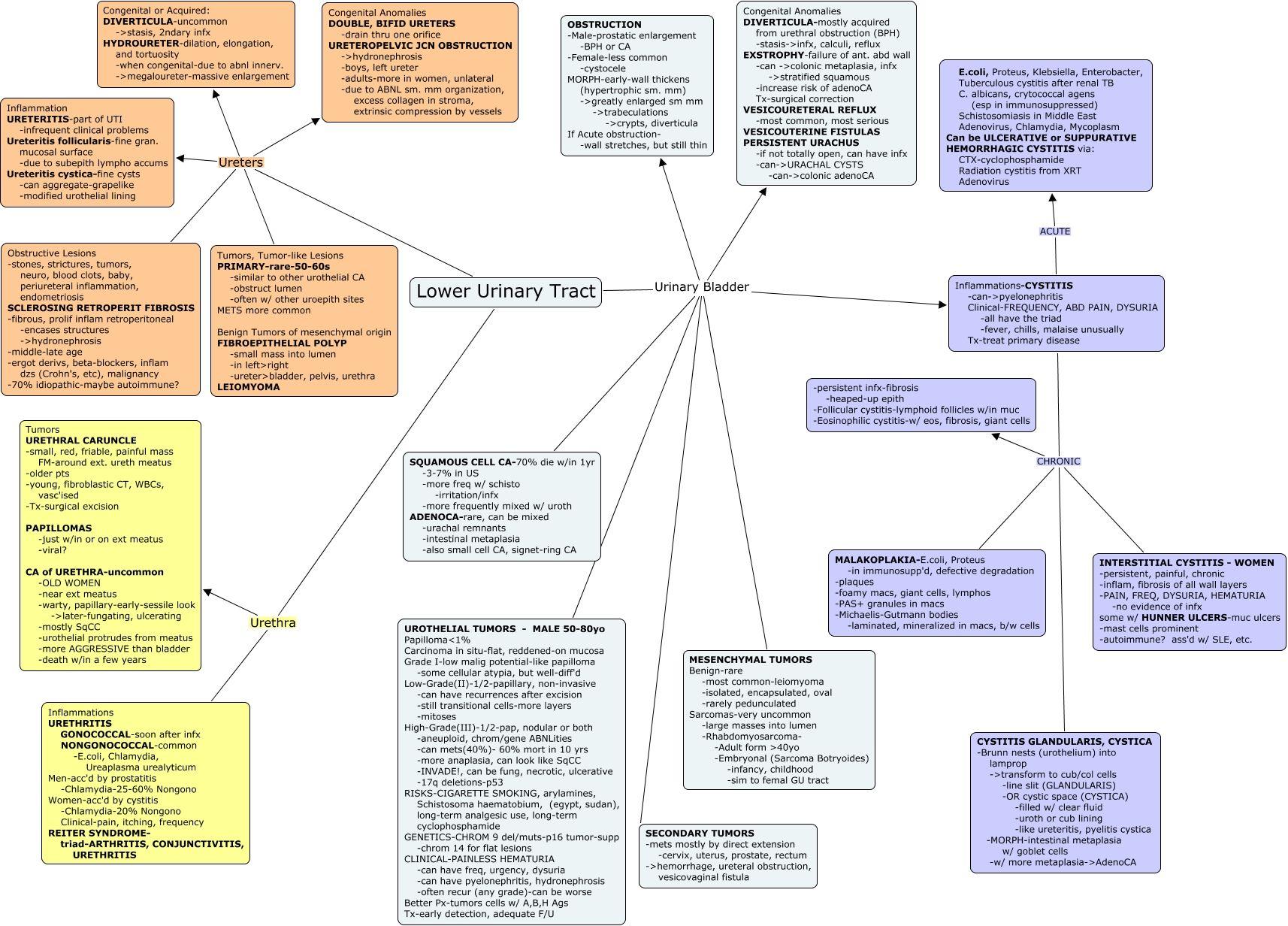 Urinary Bladder Pathophysiology | Icu nursing, Nursing ...