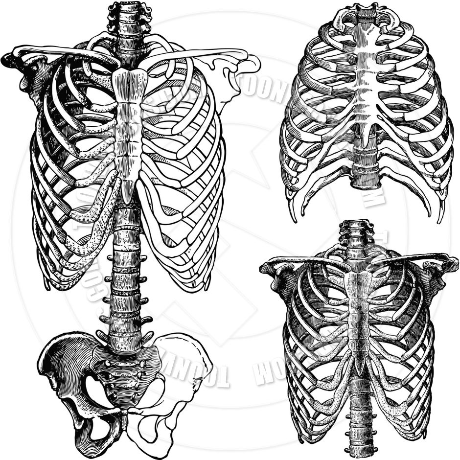 Vector Chest Skeleton Drawings | Bones | Pinterest | Skeleton ...