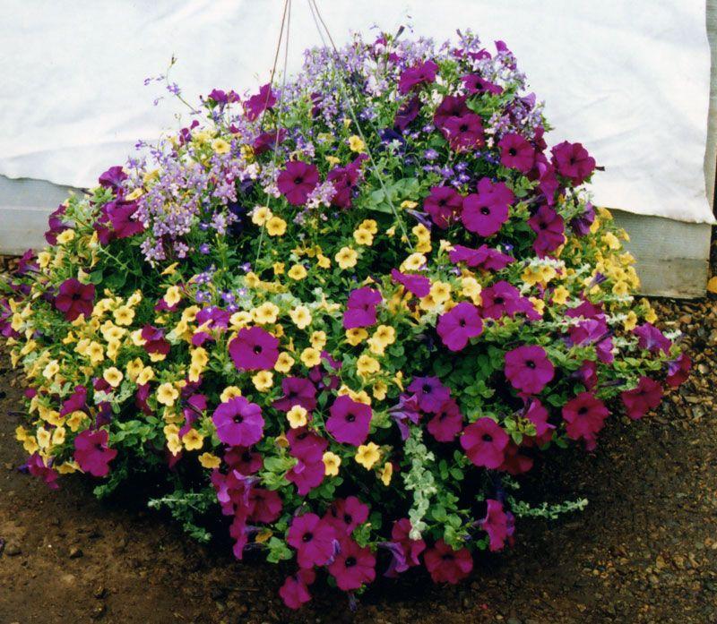 Hanging Flower Baskets | Planters & Hanging Baskets