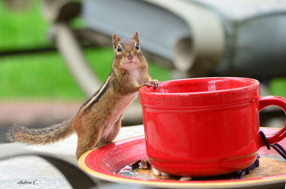 Monday....Need coffee!!! by Andrea Everhard on 500px