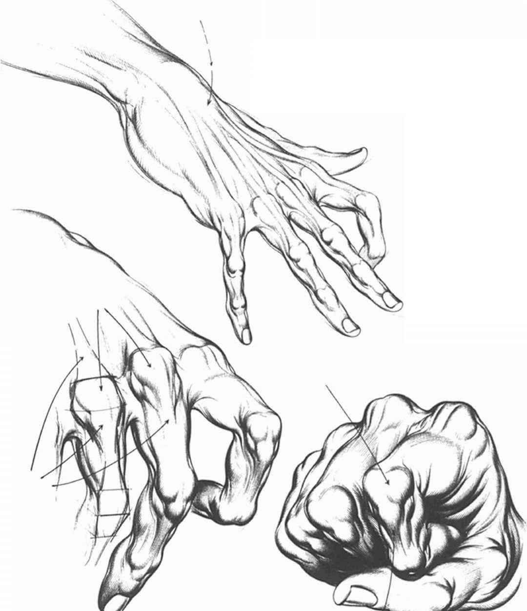 how to draw hands - Google Search | Drawing Hands | Pinterest | Hand ...