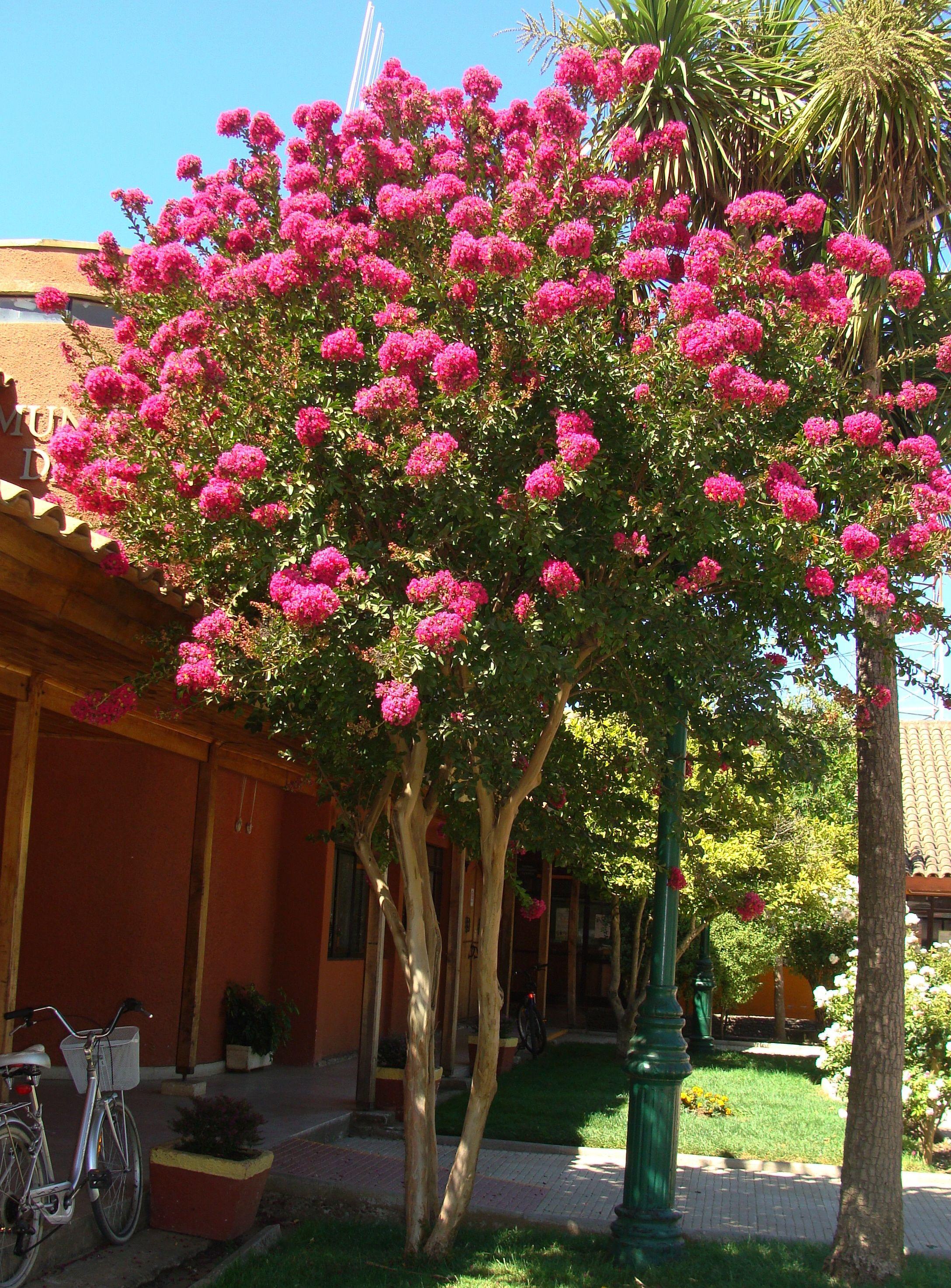 Crespon jardiner a pinterest cresp n arboles for Arboles con flores para jardin