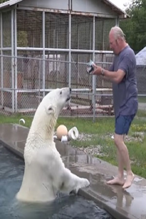 This Man Approaches A Polar Bear From Behind. I Couldn't