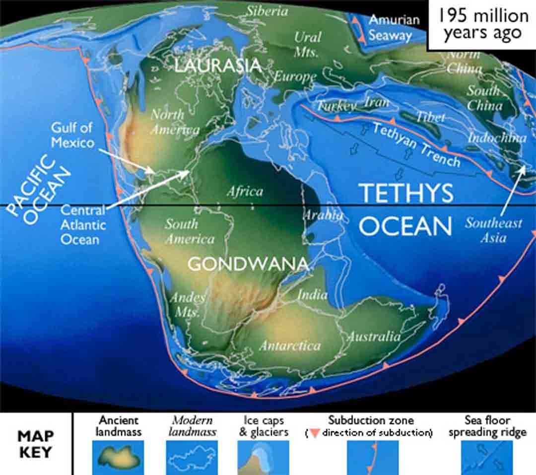 Texass jurassic period dinosaur pinterest geology earth and texass jurassic period gumiabroncs Image collections