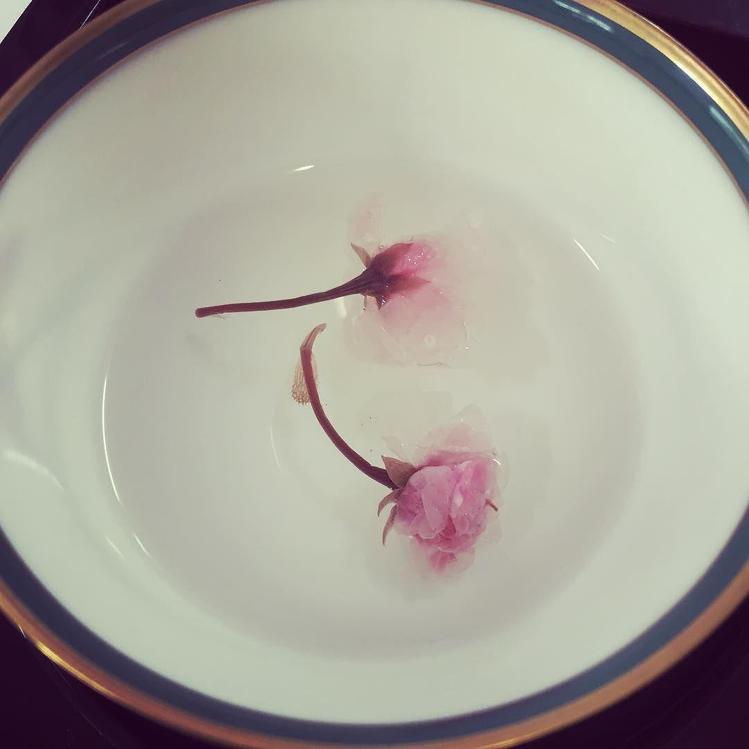 無事に婚約の両家ご挨拶おわりました 桜茶 忙しくなるけどこれからいろいろ楽しみだー by hitomix5132