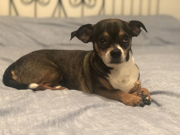 Dogs For Adoption Near Calgary Ab Petfinder In 2020 Dog