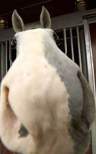Horse nose <3