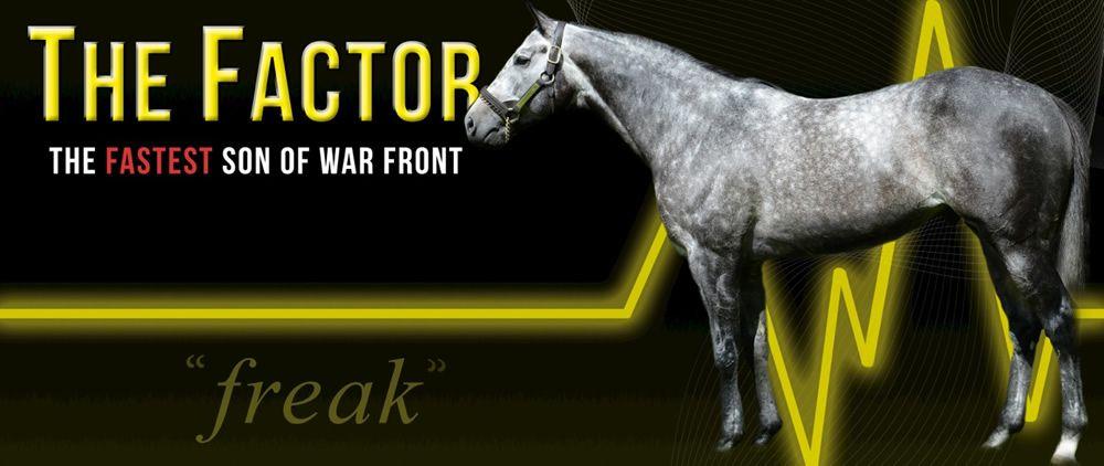 Stallion | The Factor