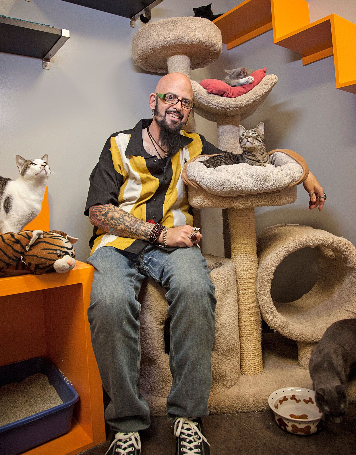 Best 25 Jackson Galaxy Ideas On Pinterest Cat Wall