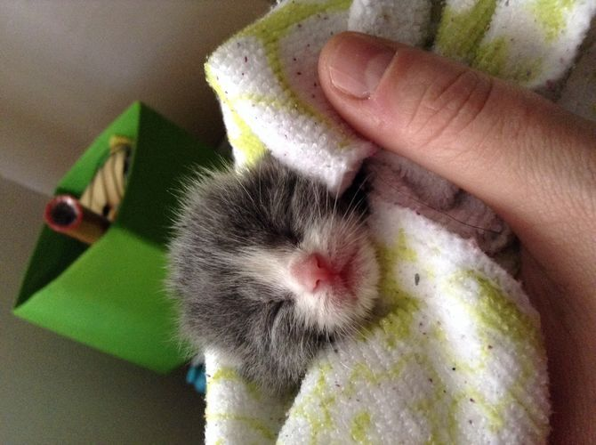 Care for Orphaned Kittens Less Than Three Weeks of Age