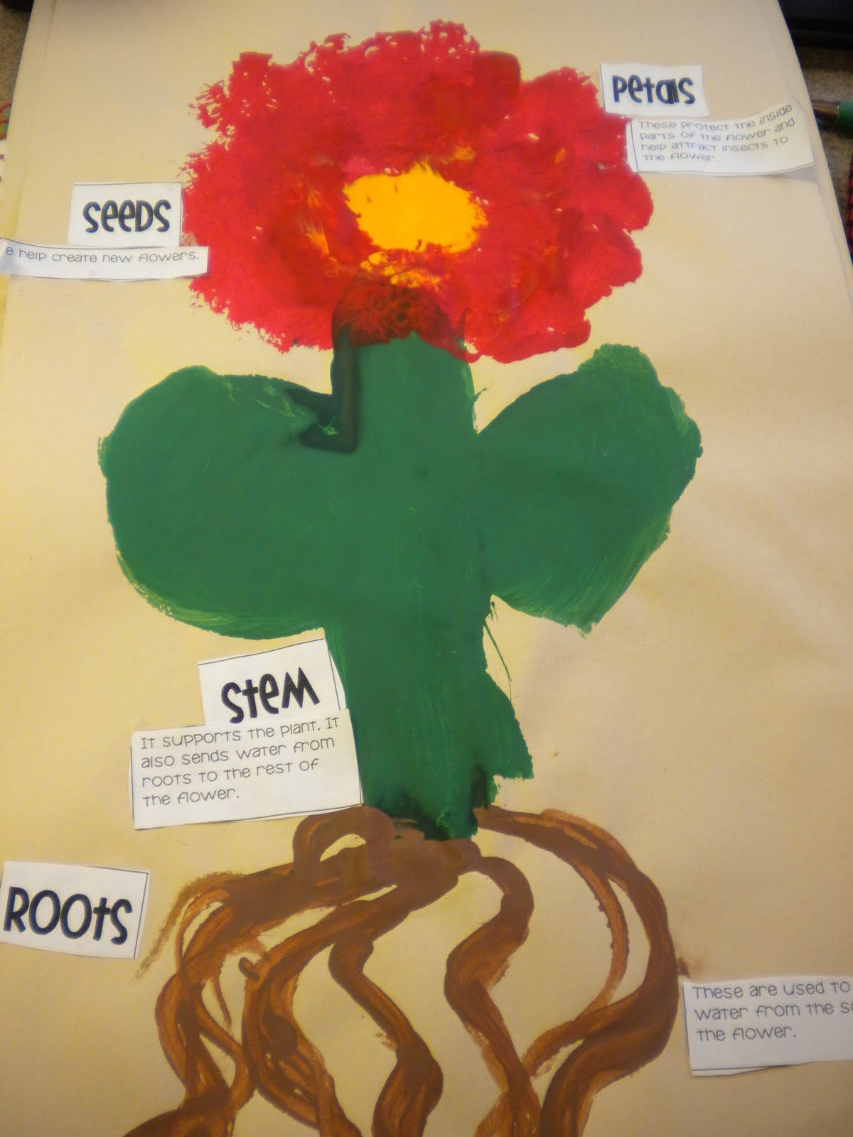 Parts Of The Flower Activity Using Labels And Poster Paint