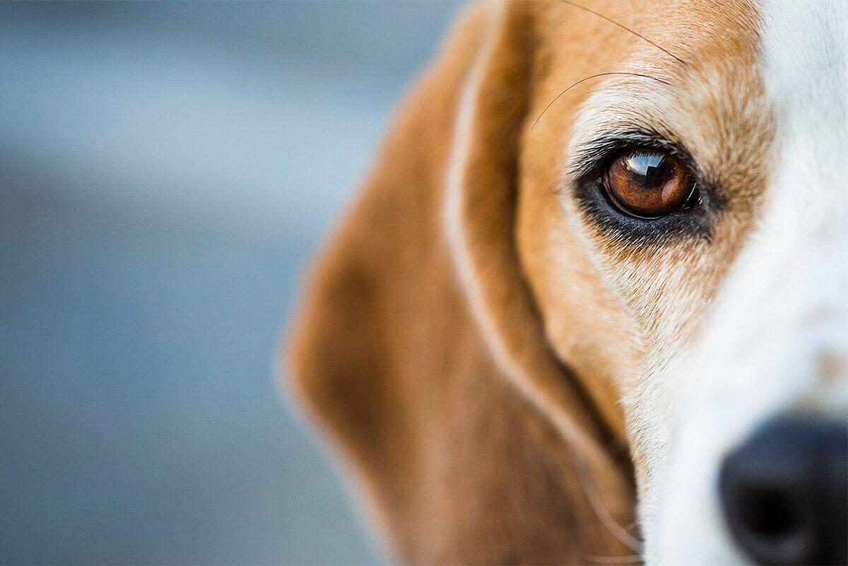 Pet Dogs Up Close