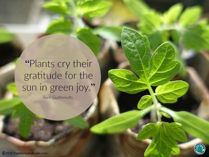 Flowering Wisdom Garden Quotes Garden Quotes Signs Garden Works