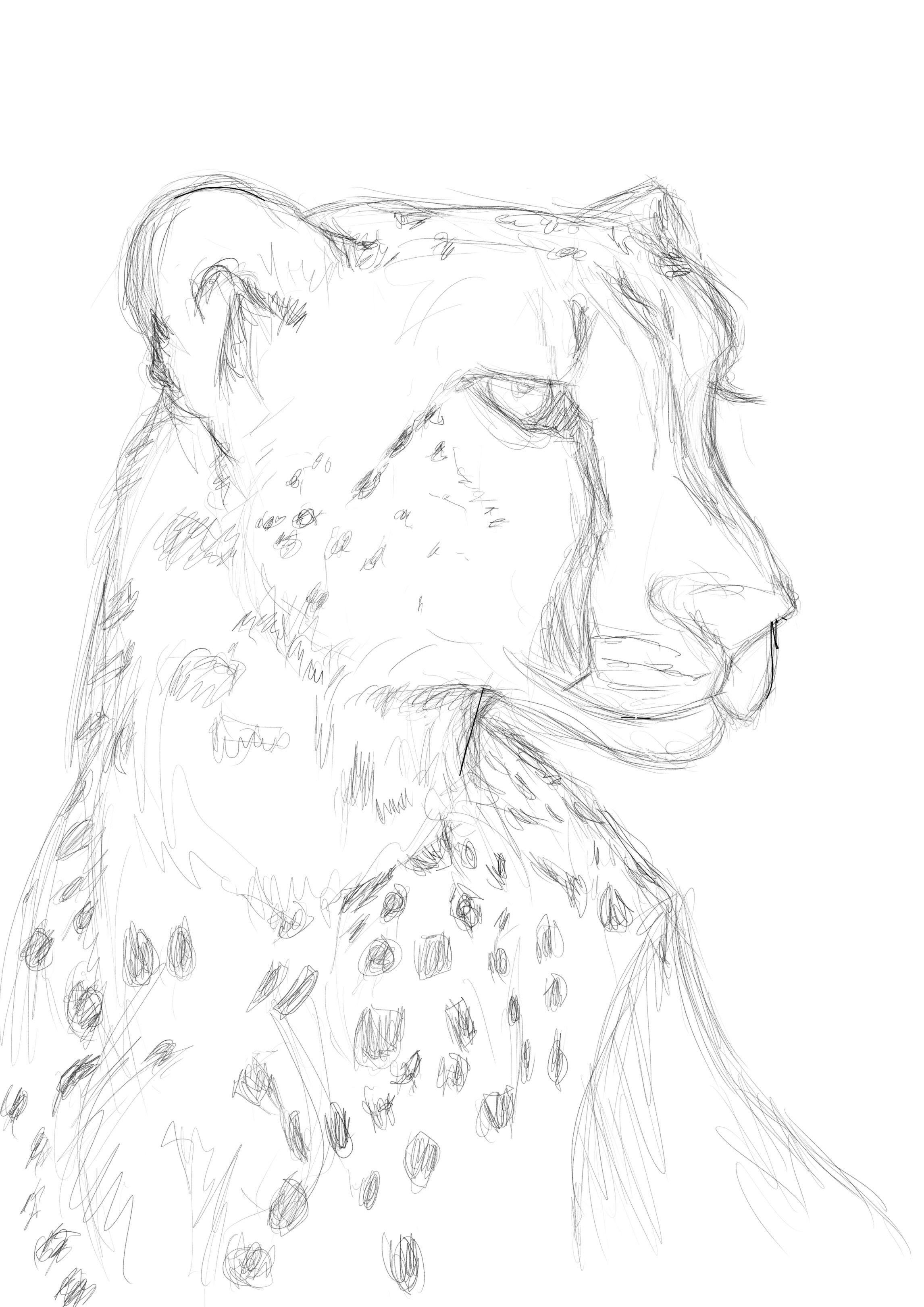 Cheetah Rough Sketch Karakalem Resim Pencil Drawing In 2019