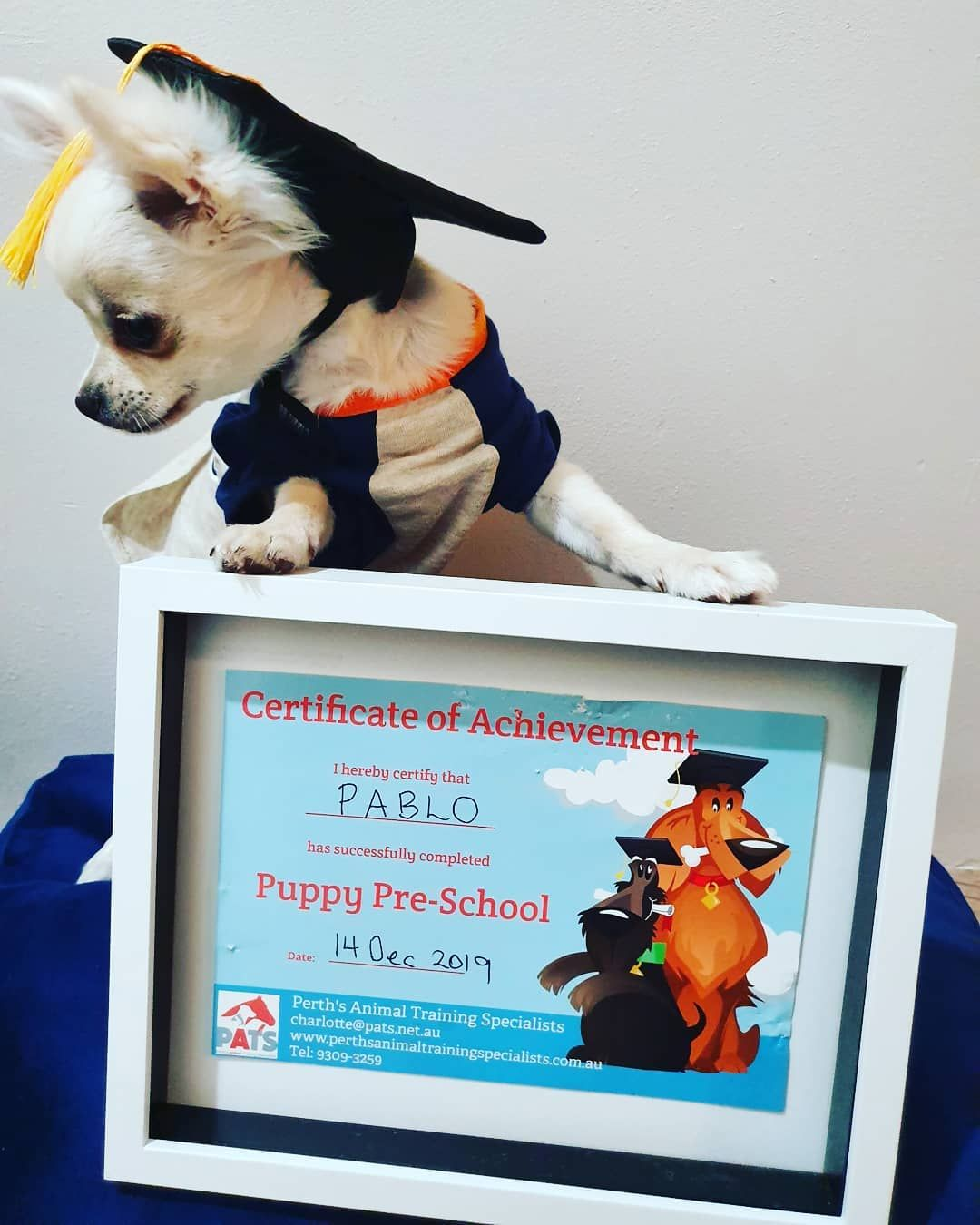 An Applehead Chihuahua For The Teacher Dogs Dogoftheday