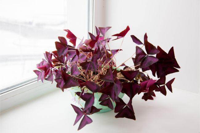 29 Best Houseplants For Beginners That Look Amazing 400 x 300