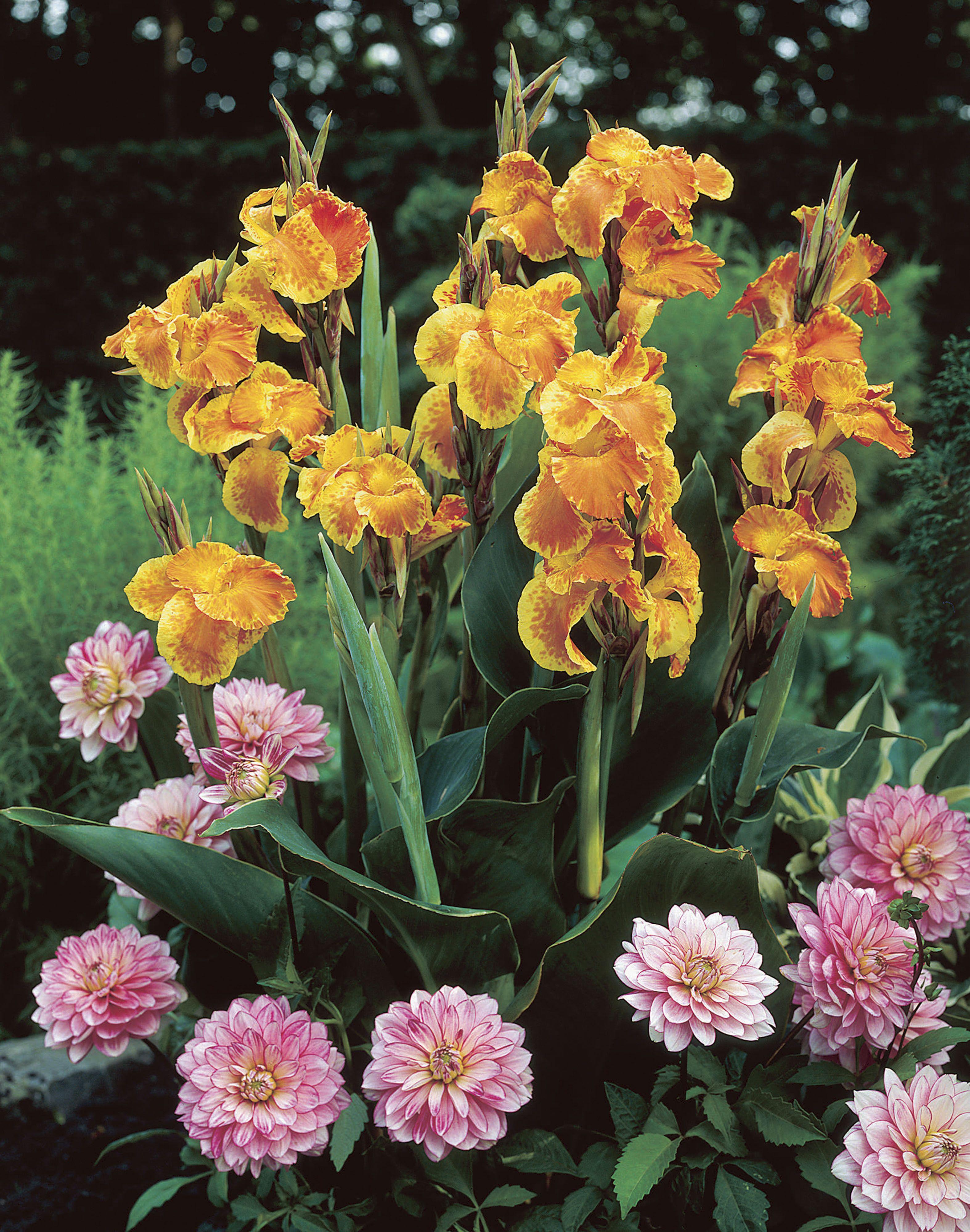 Tropical Flower Crown
