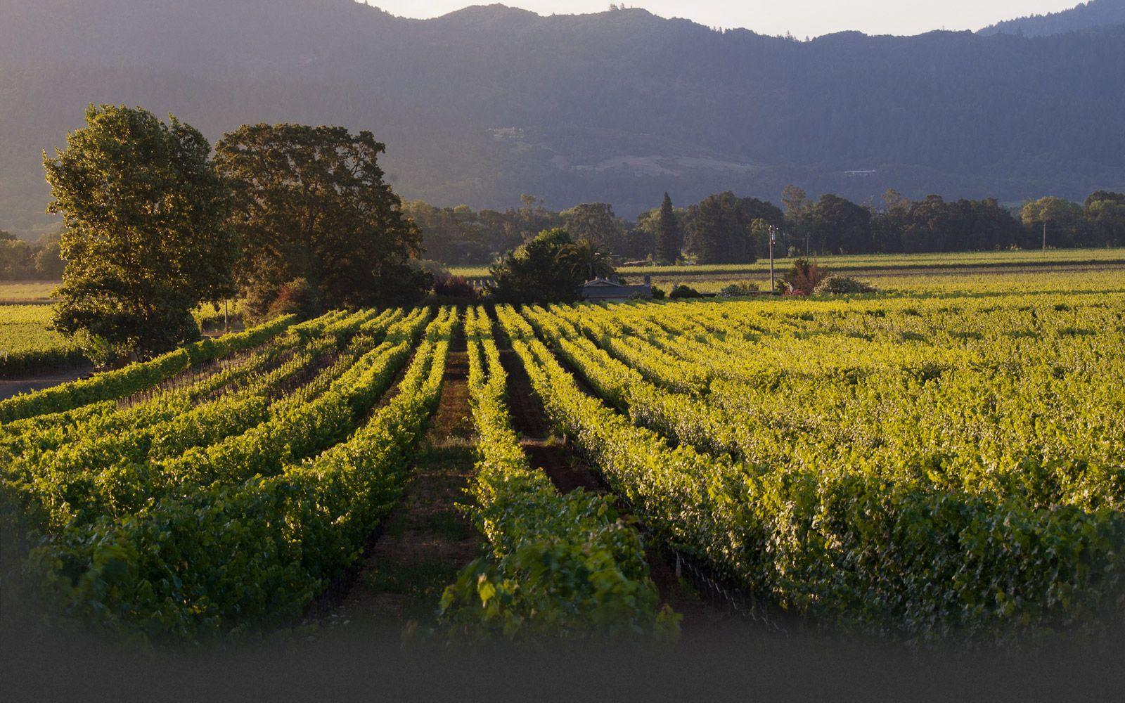 Pine Ridge Winery   Napa valley wineries, California ...