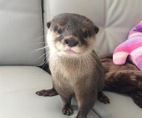 Otter Animals For Sale Biscayne Boulevard, Miami, FL in