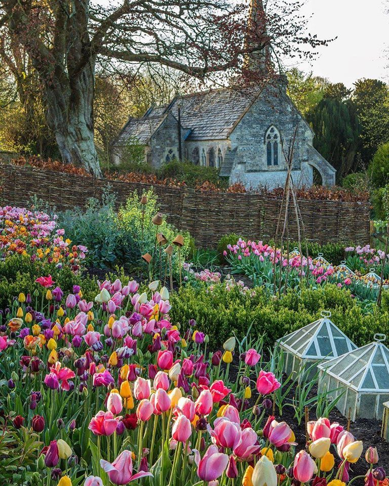 Tulips At The Old Parsonage By Passionate Plantsman Charlie Mccormick In The Lovely Village Of Little Bredy In D In 2020 Victoria Magazine Flower Farmer English Garden